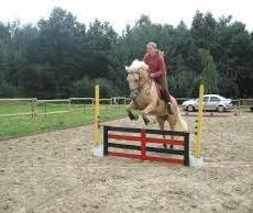 Obstacle, barrière, équitation, cso